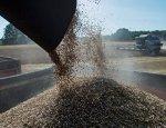 Россия может начать поставки пшеницы в Венесуэлу