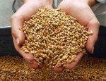 Русское зерно накормит мир: РФ бьет рекорды, унижая США и Канаду