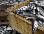 Латвийский провал: нет ни рыбы, ни транзита