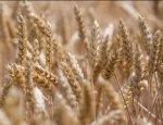 На кого прольется золотой дождь из «пшеничных долларов»
