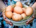 Удар по украинским яйцам. Израиль снова выбрал Россию