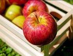 Фруктовая феерия: Украина завалила Беларусь яблоками