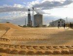 Налоговые войны: ГФС подвела под монастырь зернотрейдеров Одессы