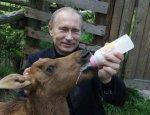 """Фины """"наставят рога"""" Евросоюзу. Русский олень еще всем покажет!"""
