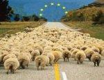 Новая колония Европы: Украина превратилась в сырьевой придаток экономики ЕС
