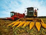 Россия бьет все рекорды: урожай кукурузы больше, чем в ЕС