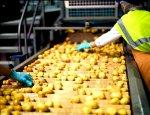 Картофель важнее санкций: США вкладываются в российское производство