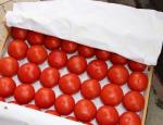 Украина пытается любой ценой «запихнуть» свои помидоры на российский рынок
