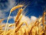Украина «внезапно» обнаружила у себя проблемы с экспортом