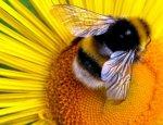 Пчелиный яд может дать Армении новые доходы