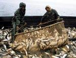 От экспорта к внутреннему рынку. Дальний Восток завалит Россию рыбой