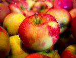 Антисанкционный сад: Русский ответ Варшаве польскими яблоками