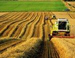 Агроновости: наука на службе у сельского хозяйства