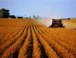 Россия возвращает статус лидера в мировом сельском хозяйстве