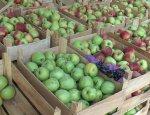 Прикладная магия: Беларусь поставила в РФ пятикратный урожай яблок