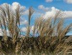 Оценка перспектив биотоплива в Украине
