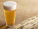 Агроновости: пиво может подорожать из-за неурожая солода