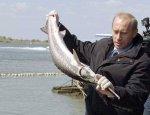 Рыбий бум. Российский лосось даст леща атлантической сёмге