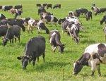 Мечта или реальность: в сельское хозяйство Украины начали инвестировать