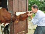 Ляшко: Расстрелять власть — коров на Украине меньше, чем после Гитлера
