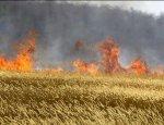 В Украине ожидается голодомор: 500 тонн зерна сгорело