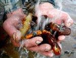 Янтарная лихорадка. Украина разворовывает сама себя