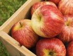 Агроновости: яблоки из Ливана и Польши