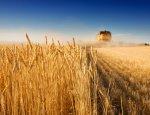 Фестиваль сельского хозяйства впервые проходит в Калининградской области