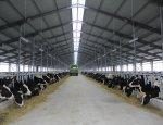 Началось строительство мясо-молочного животноводческого парка