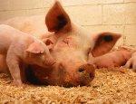 Тернопольский мясокомбинат вернулся в бизнес с привлекающей рекламой