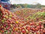 Польские яблоки даром не нужны: В Крыму «похоронили» фрукты из Польши