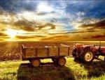 Малые сельхозпроизводители не стремятся перейти на упрощённое налогообложен