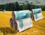 Звездный час Крыма: Россия вливает миллиарды в сельское хозяйство