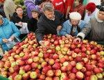 На Украине обвалились цены на яблоки