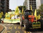 Верона против санкций: Италия может навсегда потерять рынок РФ
