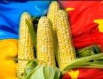 Китай запретил экспорт урожая с Украины