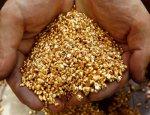 Золотая лихорадка под контролем: Камчатка раскрывает свой потенциал