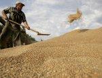 Рынок стабилен: в России отменяют пошлину на экспорт зерна