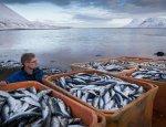 Промысел тресковых и треск санкций. Россия и Гренландия растопят лёд