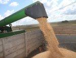 Ингушетия вышла в лидеры на Северном Кавказе по росту урожайности зерновых