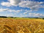 Что посеешь: Украина превращается в деградирующее аграрное государство