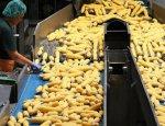Китайцы передумали покупать кукурузу на Украине.