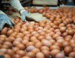 Яйца для потомков Тамерлана. Монголия избавит Россию от избытка яиц
