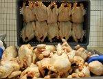 Санкции как стимул: российская птица завоевывает рынок