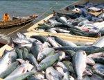 В украинских водоемах скоро не останется рыбы