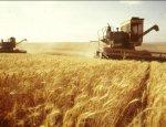 Золотое богатство России: запасы зерна в стране очень высокие