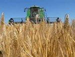 Россия снова покоряет Урал: количество посевов зерновых увеличилось в разы