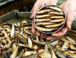 Латвийские шпроты не у дел: «Роскачество» проверило российские консервы