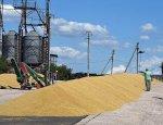 Россия продаст запасы интервенционного зерна