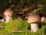 Белые против шампиньонов: Россия расширяет грибное хозяйство